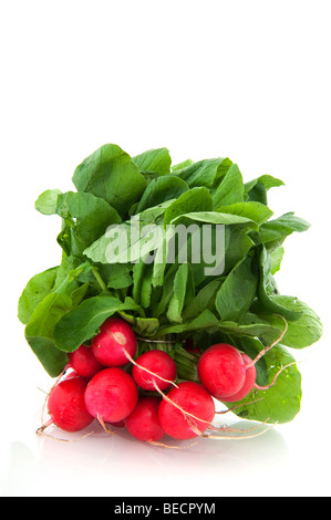 Freshness red radish in a bunch isolated over white - Stock Photo