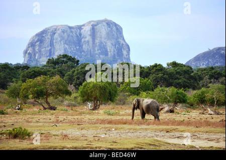 Elephant at Elephant Rock Yala national park Sri Lanka Asia - Stock Photo