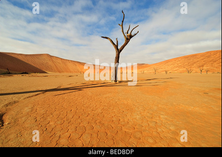 Dead Vlei in the Namib Desert with dead Camel Thorn Tree (Acacia eriloba), Namibia, Africa - Stock Photo
