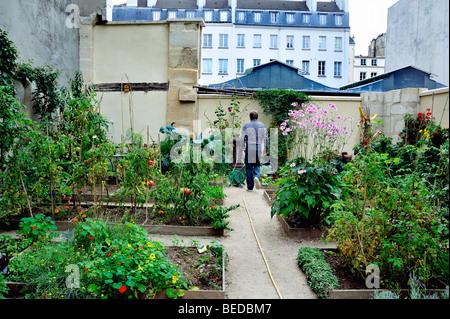 Paris, France - Man Visiting Community Garden in the Le marais District, (Near the 'Marche des Enfants Rouge') - Stock Photo