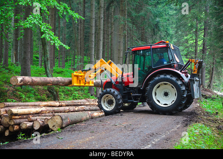 Tractor lifting a cut tree on a pile alongside a road in the woods - Stock Photo