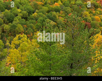 Fall in Ontario. Colorful trees abstract nature scenery - Stock Photo