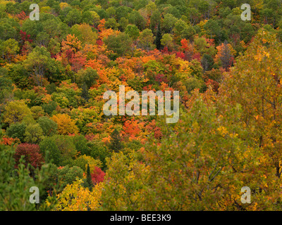 Fall in Ontario. Colorful trees abstract nature scenery. - Stock Photo
