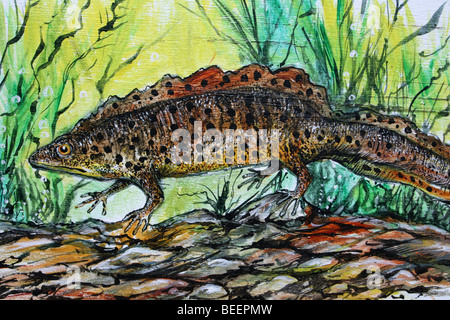 Painting Of A Great Crested Newt Taken At Martin Mere WWT, Lancashire, UK - Stock Photo