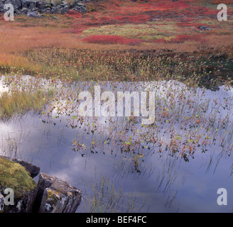 Autumn, clouds reflecting in pond, Thingvellir National Park, Iceland - Stock Photo