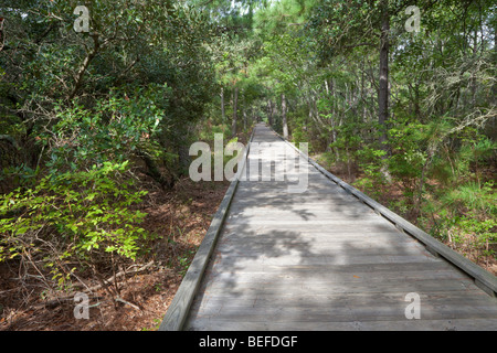 Outer Banks Nature Walk, near Currituck Light House, North Carolina. A forested dune on an outer bank barrier island. - Stock Photo