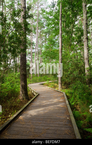 Outer Banks Nature Walk, near Currituck Light House, North Carolina. Example of maritime forest on a barrier island. - Stock Photo