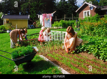 Mother and daughters picking strawberries and potatoes from family garden in rural Sweden - Stock Photo