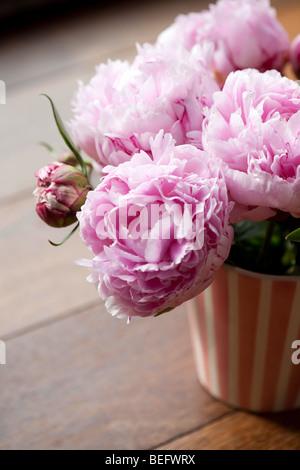 Peonies FLOWERS - Stock Photo