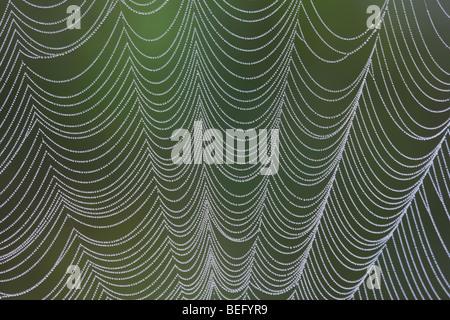 Spider web covered in dew, Lillington, North Carolina, USA - Stock Photo