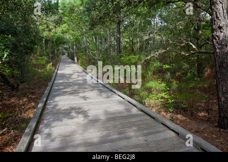 Outer Banks Nature Walk, near Currituck Light House, North Carolina.  A Maritime Forest on a Barrier Island of the - Stock Photo