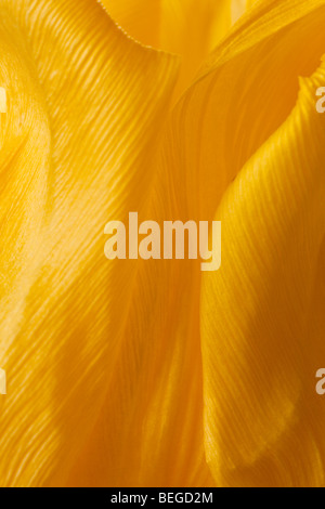 yellow tulip petals abstract background - Stock Photo