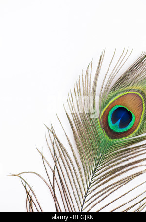 Close up of eye of peacock feather on white background Stock Photo