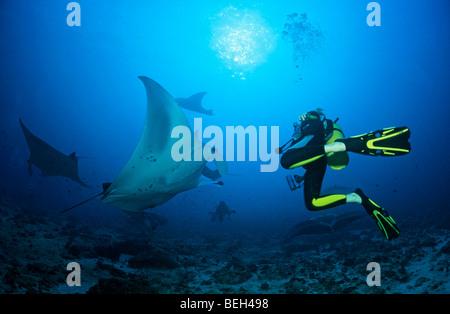 Mantas and Diver, Manta birostris, Ari Atoll, Maldives - Stock Photo