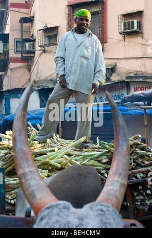 Bull cart hauling sugarcane to market in Mumbai India - Stock Photo