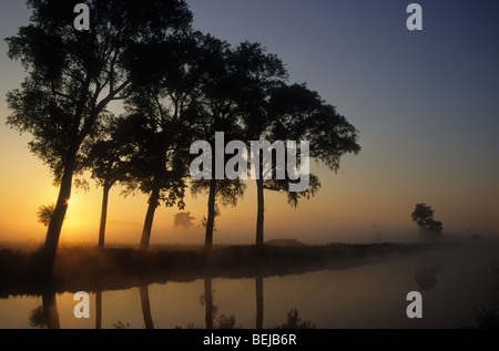 Sunrise and row of silhouetted Canadian poplars (Populus x canadensis) along canal, Belgium - Stock Photo