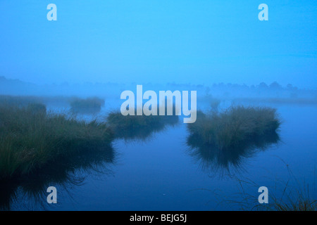 Mist over pool in heathland, Kalmthoutse Heide, Belgium - Stock Photo