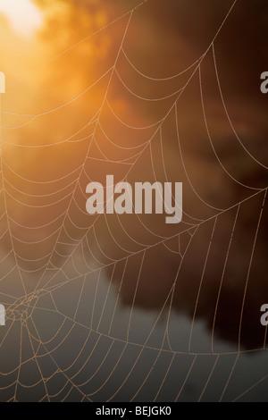 Spider web covered in dew, Belgium - Stock Photo