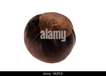 Common Horse-chestnut nuts / conkers (Aesculus hippocastanum) on white background - Stock Photo