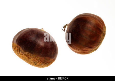 Sweet chestnut nuts / marron (Castanea sativa) on white background - Stock Photo