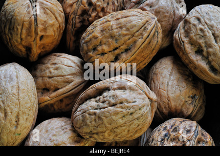 Common walnut / Persian walnut / English walnuts (Juglans regia) native to Southern Europe and Asia harvested in - Stock Photo