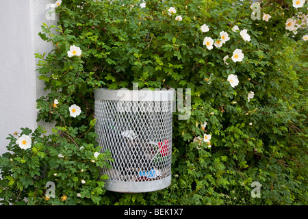 Trash can in a rose bush - Stock Photo