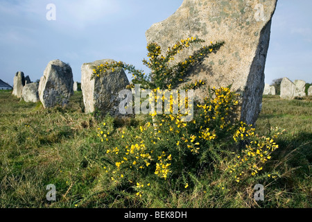 Neolithic menhirs / standing stones at Carnac, Brittany, France - Stock Photo