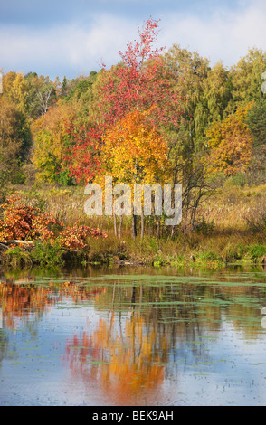 Autumn landscape. Trees and reflections in a river. - Stock Photo