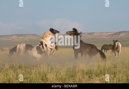 Animal Horse McCullough Peaks Mustang Wild US USA - Stock Photo