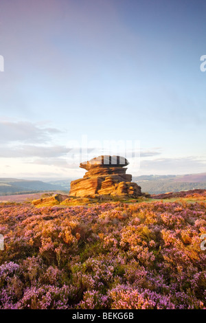 Mother Cap surrounded by Summer Heather on Millstone Edge at Owler Tor above Heathersage in the Peak District National - Stock Photo