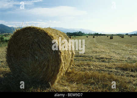 Bales of hay on field, Spain - Stock Photo