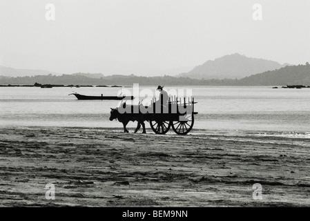 Myanmar (Burma), Ngapali beach ox cart - Stock Photo