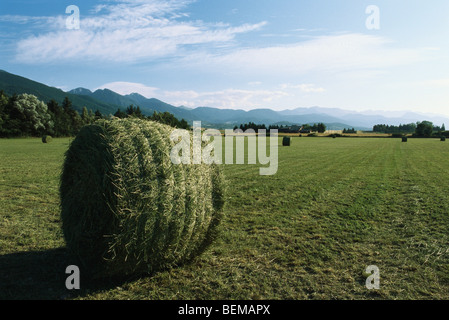 Bales of hay in field, Cerdanya, Pyrenees, Spain - Stock Photo