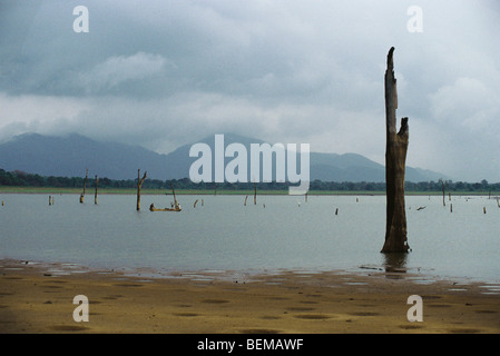 Dead trees standing in lake, fisherman in canoe in distance and mountains in background, Sri Lanka - Stock Photo