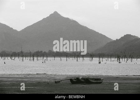 Dead trees standing in lake, canoes on shore, Sri Lanka - Stock Photo