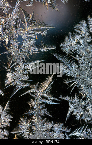 Ice crystals / frost flowers forming on frozen window pane during hoarfrost in cold winter - Stock Photo
