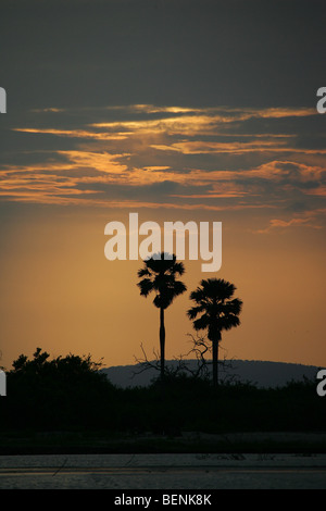 Sunset over the Selous Game Reserve in Tanzania - Stock Photo