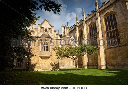 The descendant of Newton's apple tree at Trinity College, Cambridge - Stock Photo
