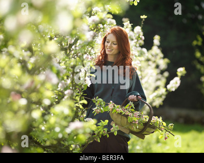 Woman Cutting Apple Blossom In Orchard - Stock Photo