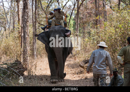 Mahout guide on back of working Indian elephant with tourists on safari elephant rides in forest Kanha National - Stock Photo