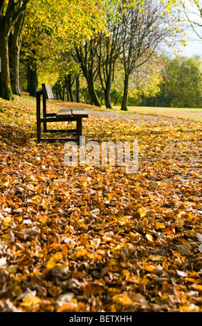 selective focus image of a park bench in autumn - Stock Photo