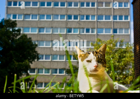 A domestic cat basks in the sun on a North London Islington Council Estate. - Stock Photo