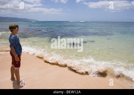 A ten year old boy watches Hawaiian basking turtles swimming, preparing to bask in the sand - Stock Photo