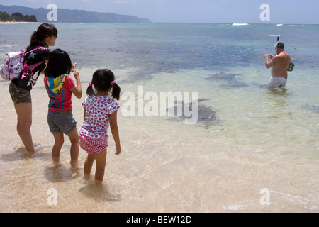 Japanese tourist family watches and photographs giant Hawaiian green sea turtle swimming in shallow water, Honolulu, - Stock Photo