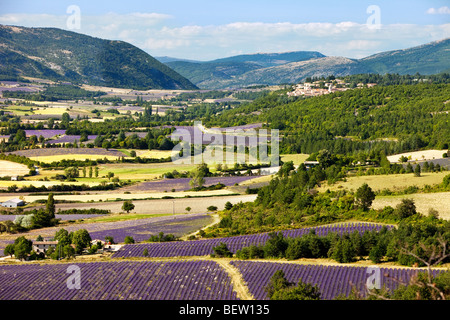 Patchwork of Farmer's fields in valley below Sault, Provence France - Stock Photo