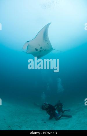 Diver watching Manta Ray, Manta birostris, Kandooma Manta Point, South Male Atoll, Maldives - Stock Photo