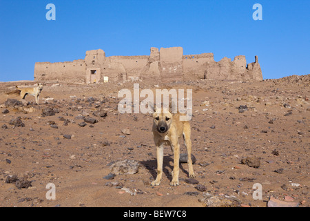 Ruins of El-Ghweita Temple in Charga Oasis, Libyan Desert, Egypt - Stock Photo