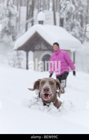 Dog peeking out of deep snow, one person in the background, Elsbethen, Salzburger Land, Austria - Stock Photo