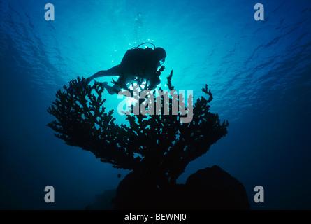 Scuba diver explores coral reef. Sinai, Egypt - Red Sea - Stock Photo