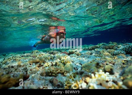 Free diver explores coral reef. Sinai, Egypt - Red Sea - Stock Photo